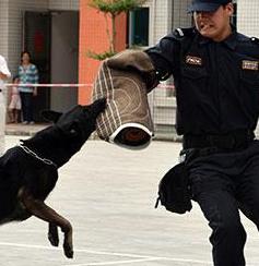 乐虎国际保安警犬护卫